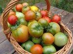 Витамины или урожай