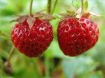 Экологическое садоводство: цели и задачи