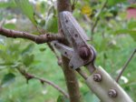 Секреты обрезки плодовых деревьев