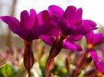 Календарь работ цветовода: апрель