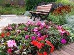 ЦВЕТ в садовом дизайне: ОСНОВЫ КОМПОЗИЦИИ