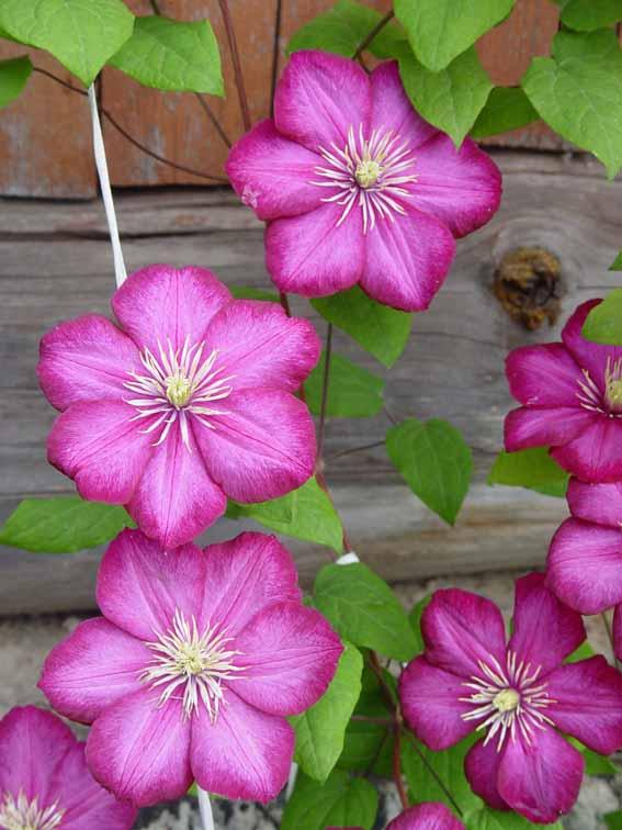 Также вьющиеся растения растения