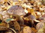 По грибы в октябре