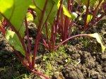 Примерные сроки посева семян овощей