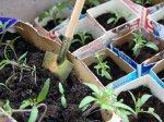 Заботы огородника в марте
