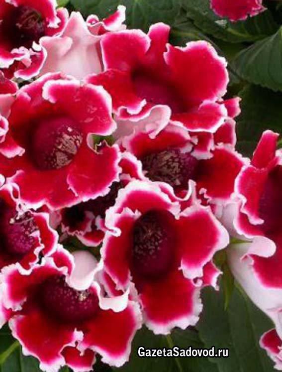 Сочинение на тему мой любимый цветок