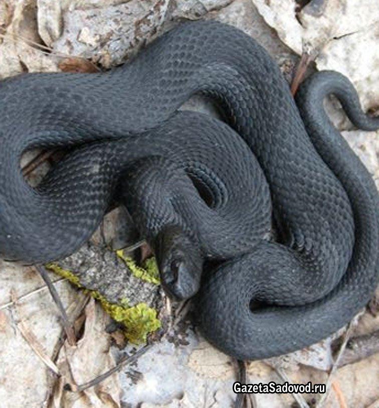Змеи в наших лесах новости