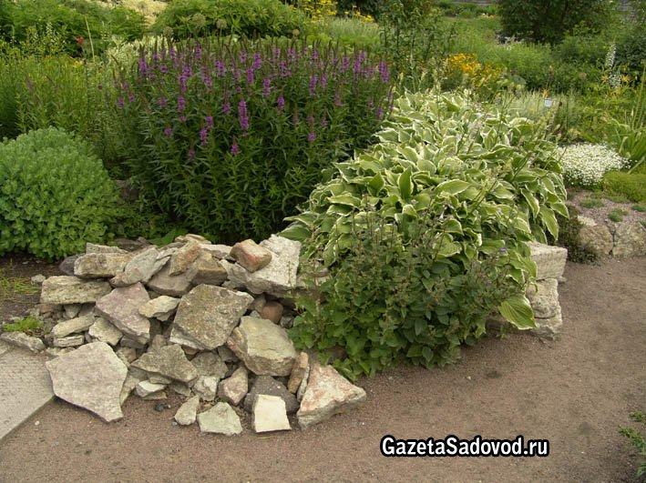 Домашний садик для летнего цветения