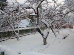 Зимние повреждения плодовых