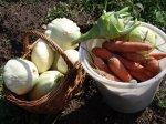 Сушка овощей – способ сохранить урожай и витамины