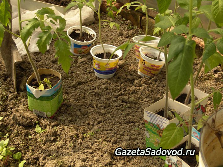Выращивание огурцов: 11 секретов хорошего урожая