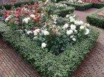 Живые изгороди, и украшение цветников. Декоративные кустарники