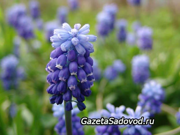 Посадка дачных цветов с фото