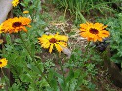 Однолетние цветы: посадка, выращивание