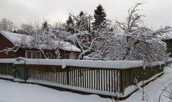 Сад в зимний период