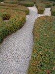 Живые изгороди в вашем саду