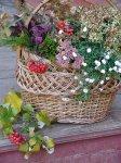 Как правильно засушить цветы