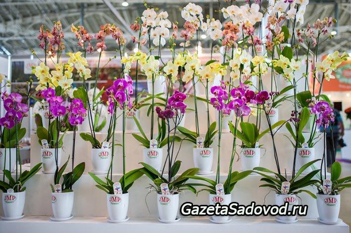 Выставка цветы в москве 2017