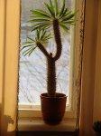 Влияние удобрений на комнатные растения