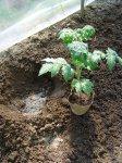 Биофильные элементы овощей