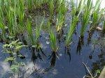 Как болото превратить в плодородный огород