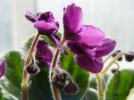 Цветы в бархатном наряде