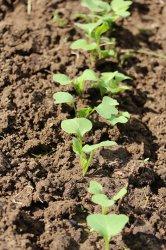 Элементы, необходимые растениям: АЗОТ