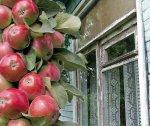 Колонновидная яблоня: посадка
