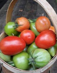 Питание овощных культур с учетом сортовых особенностей