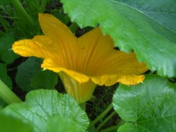 Стрессы для растений и потери урожая