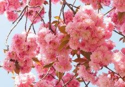 Необычные виды цветов для российской дачи