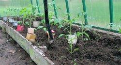 Потери урожая: причины и следствия