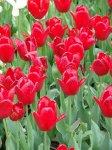 Как создать пышный цветник у себя в саду?