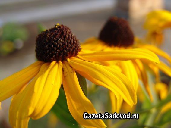 Доставка цветов по Москве  заказать цветы с доставкой в