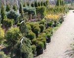 """Питомник садовых и декоративных растений """"Майнило"""""""