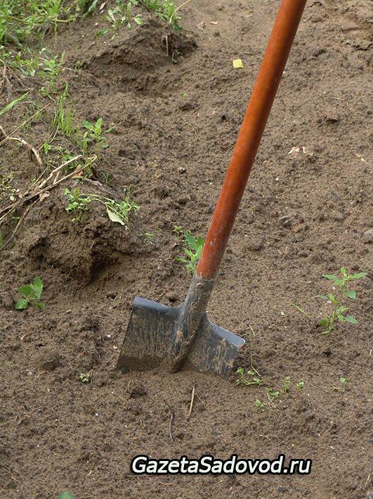Глинистые почвы что сажать как 57