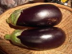 Почему баклажаны не дали плодов?