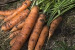 8 способов хранения моркови