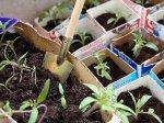 Время выращивать рассаду