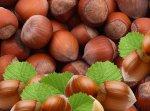 Фундук - ценная орехоплодная культура